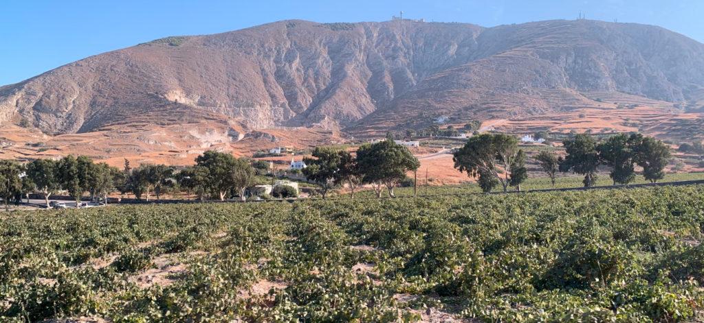 a-taste-of-greece:-discovering-santorini's-volcanic-vineyards